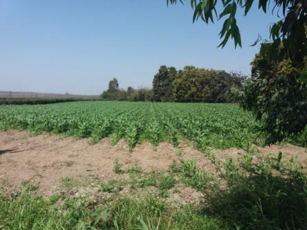 40000 m² – Terreno Agricula en Chincha en Venta - Los Ángeles